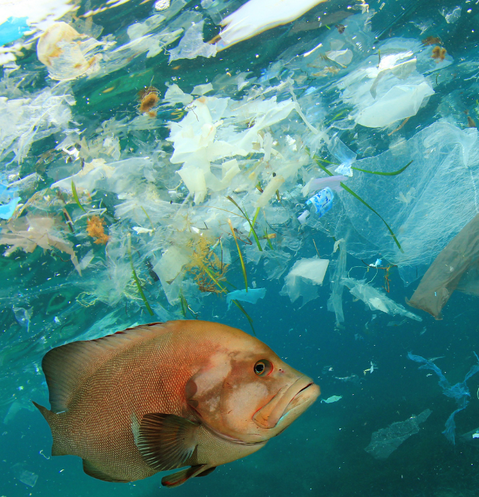 Fish swimming in plastic and microplastic waste