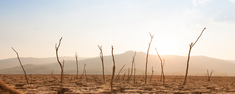 Scorched earth with dead trees in sunshine as a result of global warning
